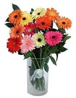 Gerbera arranged in vase